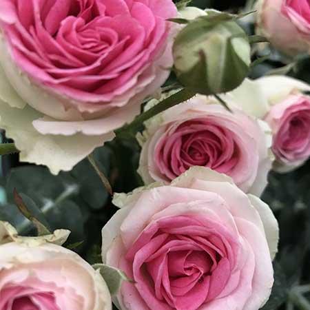 Atelier couronne de fleurs à Angers